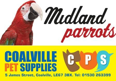 Hand Reared Baby Parrots
